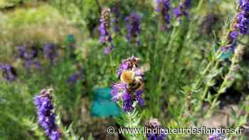 Profiter de l'été pour découvrir le conservatoire botanique à Bailleul - L'Indicateur des Flandres
