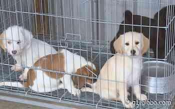 Veja como adotar animais resgatados após rompimento de barragem em Brumadinho - G1