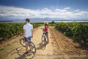 Canet-en-Roussillon : un été dans les vignes - La Semaine du Roussillon