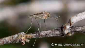 Pensilvania reporta el primer caso del virus del Nilo Occidental en 2020 - Univision