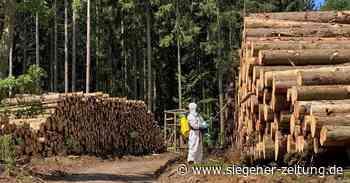 Waldgenossen wehren sich: Mit Gift gegen die Borkenkäferplage - Siegener Zeitung