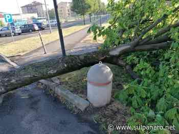 Concordia sulla Secchia, il maltempo lascia rami e alberi a terra - SulPanaro