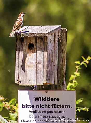 Kindergartenteam hilft im Naturzentrum - Rust - Badische Zeitung