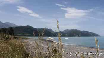 Picton to Kaikōura Whale Trail among multimillion-dollar PGF grants for Marlborough, Nelson - Stuff.co.nz