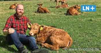 Rinder-Leasing: Bauer aus Stockelsdorf bietet Patenschaft für Tiere an - Lübecker Nachrichten