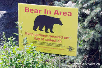 Bear reported on Bossio Road back deck | Elk Valley, Fernie - E-Know.ca