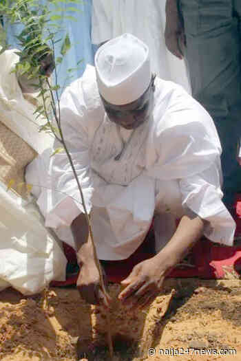 Tree Planting: Sokoto state. govt. distributes 2m seedlings - Naija247news