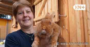 Tierheim Henstedt-Ulzburg hat neue Gehege und Ställe für die Kleintiere - Kieler Nachrichten