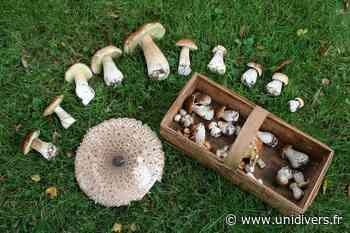 Découverte des champignons samedi 10 octobre 2020 - Unidivers