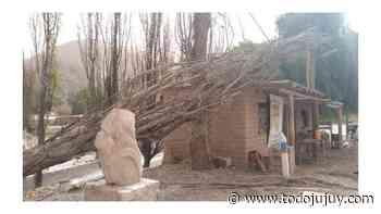 Jujuy: los fuertes vientos tiraron árboles y postes en la Quebrada de Humahuaca - todojujuy.com
