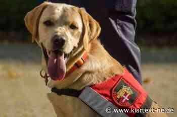 Neuss: Hundestaffel leistet Amtshilfe in Grevenbroich - Personensuche in der Nacht   Rhein-Kreis Nachrichten - Rhein-Kreis Nachrichten - Klartext-NE.de