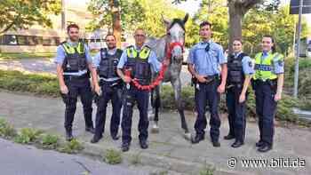 Tiere büxten in Hilden aus - Polizei fängt Pferde ein - BILD