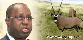 UNACOIS/ Yessal : Abdou Karim SALL parle de 'bousse' pour faire oublier les Oryx - Wal Fadjri