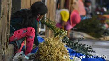 Wuira wuira, eucalipto, manzanilla, limón y jengibre tiene el Kit del Tata Quispe para 100.000 paceños - Opinión Bolivia