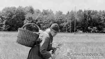 Bunte Blumen in der Nachkriegszeit - kreisbote.de