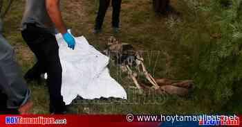 En Matamoros: Le llevaba despensa a su amigo y encontró puros huesos - Hoy Tamaulipas