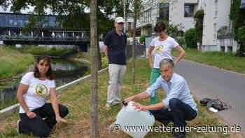 Bad Vilbeler sorgen sich um junge Bäume in der Stadt - Wetterauer Zeitung