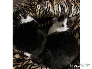 Herman And Melville Are Princetons Pets Of The Week - Princeton, NJ Patch