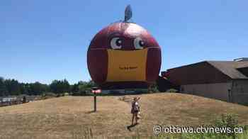 The Big Apple in Colborne, Ont. is now wearing a mask - CTV News Ottawa