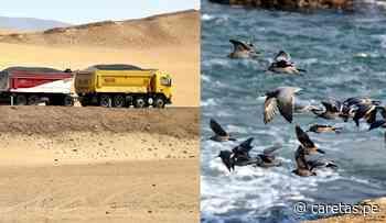 Reserva de Paracas podría contaminarse como Antofagasta ante eventual almacenaje de concentrado de... - Caretas