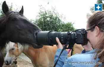 Foto-Shootings Für Vierbeiner: Wangerländerin macht aus Tieren Models - Nordwest-Zeitung