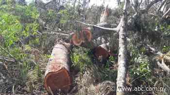 Intervienen finca y constatan tala ilegal de árboles en Yataity del Norte - Nacionales - ABC Color