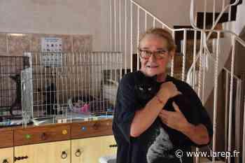La ville de Gien engagée pour lutter contre la prolifération des chats errants - La République du Centre