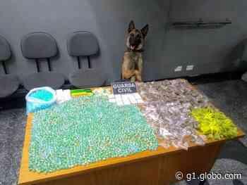 Com ajuda de cão farejador, Guarda Civil apreende drogas enterradas em Atibaia - G1