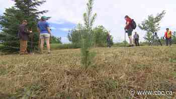 Summerside planting trees at park, giving others away - CBC.ca