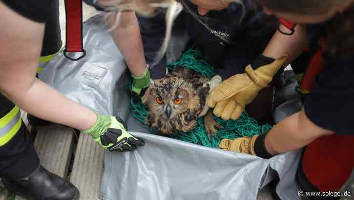 Feuerwehreinsatz in Bad Segeberg: Das Uhu-Kind ist in den Brunnen gefallen - DER SPIEGEL