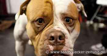 Hundebesitzer lässt Bulldogge in Ottweiler im geschlossenen Auto bei großer Hitze - Saarbrücker Zeitung