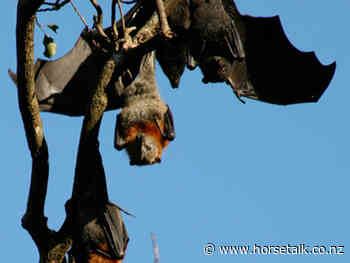 Why are bat viruses such as Hendra and ebola so deadly? Researchers investigate - Horsetalk