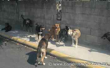 Proliferación de animales callejeros genera plagas en colonias de Altamira - El Sol de Tampico