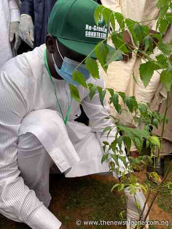 Desertification: Group, SDGs office collaborate to plant 6,000 seedlings in Sokoto - The News