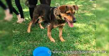 Aprueban recursos para la Casa de Salud Animal de Coatepec - Vanguardia de Veracruz