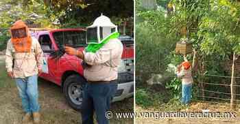 Enjambre de abejas ponen en jaque a los habitantes de Cerro Azul - Vanguardia de Veracruz