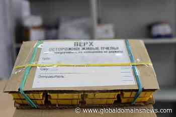 The postal service of Novosibirsk has made a rating of the most unusual packages - The Global Domains News