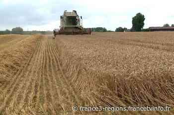 VIDÉO. A Bailleul, une moisson de blé exceptionnelle après un printemps très ensoleillé - France 3 Régions