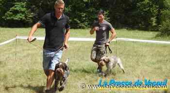 Des chiens d'arrêt en vedette - La Presse de Vesoul