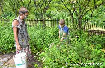Gardeners help homeless in Greenfield's Energy Park - The Recorder