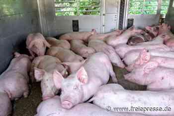 Lichtenau: Schwerwiegende Verstöße bei Tiertransporten - Freie Presse