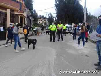 Indignación en Azogues por muerte de perro colgado en un palo - El Universo