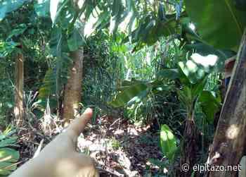 Habitantes de San Felipe denuncian proliferación de serpientes - El Pitazo