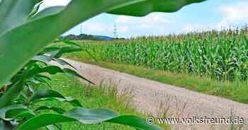 Zahl der landwirtschaftlichen Betriebe mit Tieren nimmt im Kreis Bernkastel-Wittlich ab - Trierischer Volksfreund