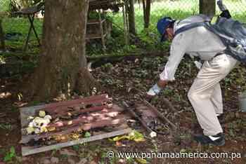 Distritos de David y Dolega registran una alta incidencia de casos de dengue clásico - Panamá América