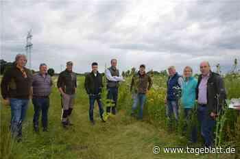 Blühende Felder sichern die Artenvielfalt in Bargstedt - TAGEBLATT - Lokalnachrichten aus Harsefeld. - Tageblatt-online