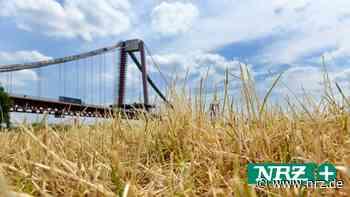 Regen hat Landwirten in Emmerich und Rees erst mal geholfen - NRZ