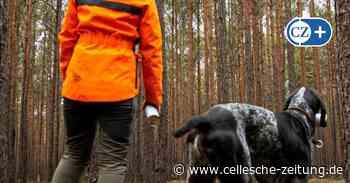 Waldumbau als Folge des Klimawandels: Zu wenig Forstpersonal auch in Celle - Cellesche Zeitung