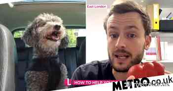 Lorraine vet sparks fury with 'poisonous' peanut butter advice for dogs - Metro.co.uk