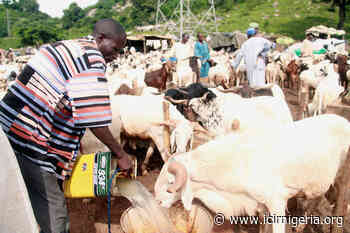 Katsina Emirate Council cancels sallah celebration over insecurity, COVID-19 - Internatinal Centre For Investigative Reporting
